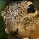 Squirrels in the attic   Charlotte, NC
