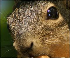 Squirrels in the attic | Charlotte, NC