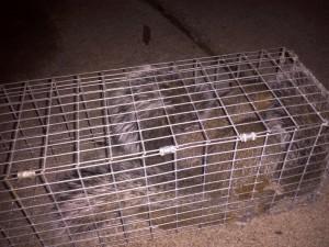 Squirrel Pest Control Charlotte NC