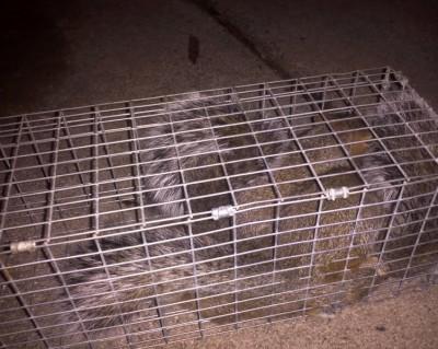 Squirrel Pest Control Charlotte