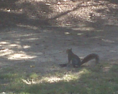 Squirrel Removal Cost