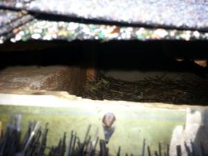 Squirrels nesting in attic Monroe NC
