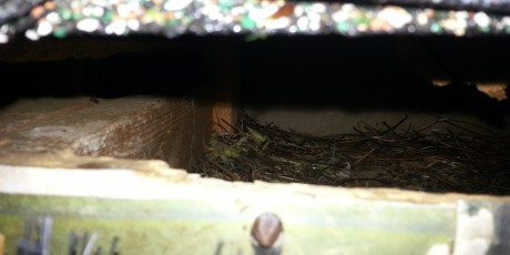 Squirrels nesting in attic Monroe NC