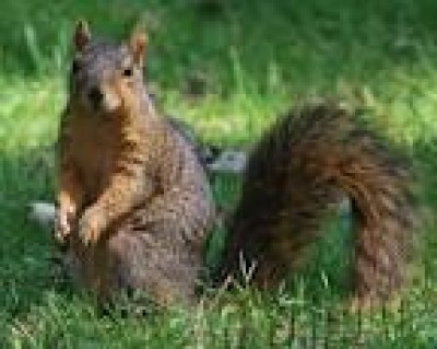 Mount Holly Squirrel Removal
