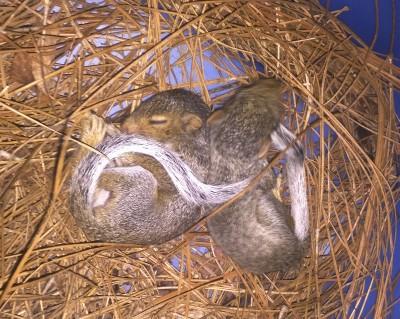 Squirrel Babies Season Charlotte NC