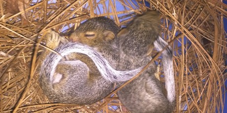 Squirrel Babies Season Charlotte NC